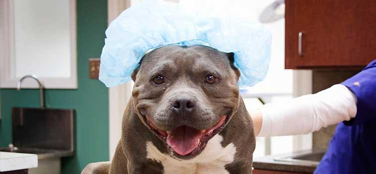 Pet Boarding Services In Clovis Nm Clovis Veterinary Hospital